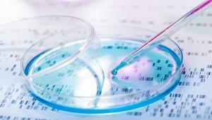 special seminar: Single-cell transcriptome analysis of pancreatic islet development