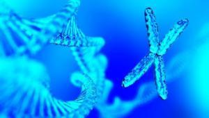 Special Seminar: Long noncoding RNA in brain cancer