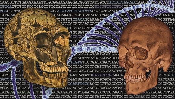 """ד""""ר רחל שריג, אורתודונטית מומחית וחוקרת אבולוציה של השן נבחרה על ידי אתר גלובס"""