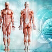 מחקר בחוג לאנטומיה ולאנתרופולוגיה