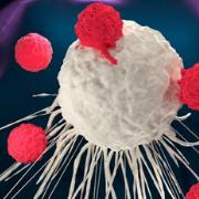 אחד בשביל כולם: הטיפול האימונותרפי שיתאים לסוגי סרטן רבים